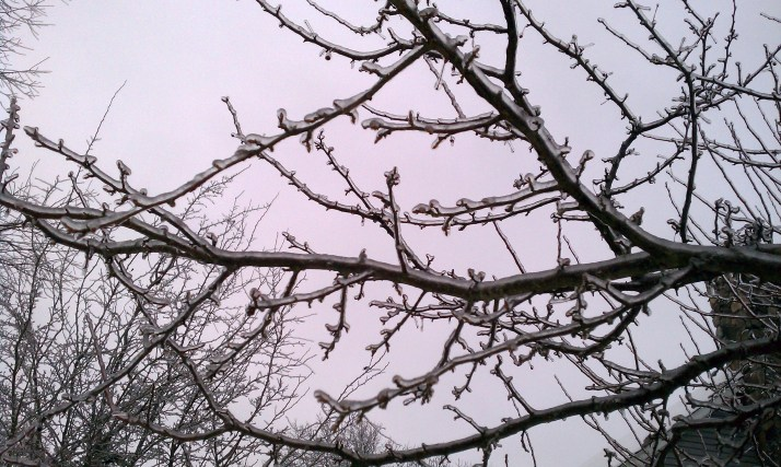 icy-branches