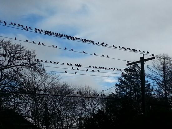 birds-on-high-wires
