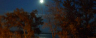cropped-cropped-night-with-moon1.jpg